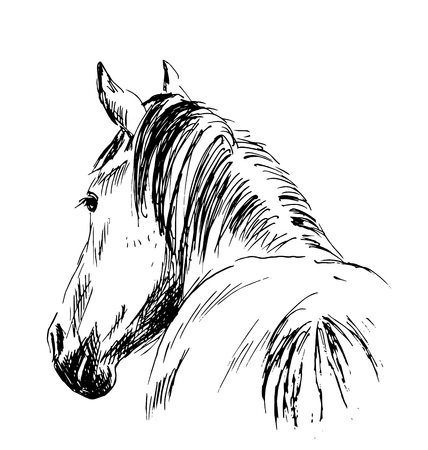 horsehair: sketch horses Illustration