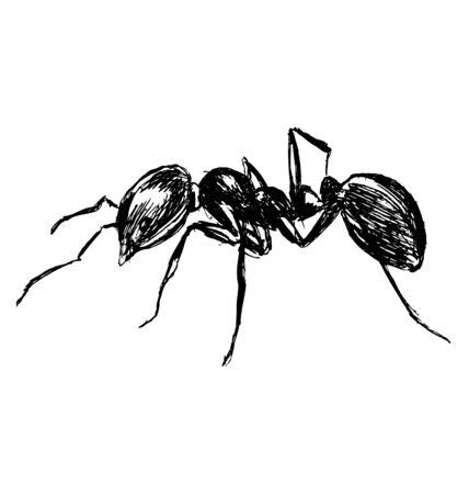 arthropoda: Hand sketch ant Illustration