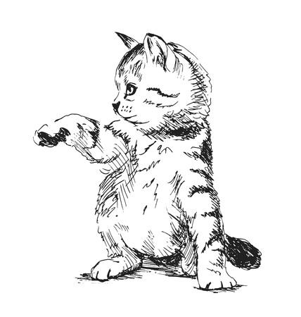 carnivores: Hand sketch kitten. Vector illustration