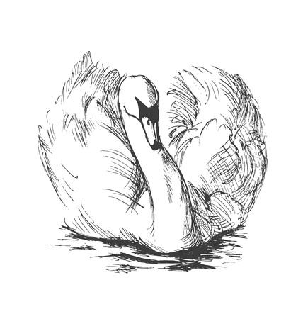 Hand sketch floating swans. Vector illustration
