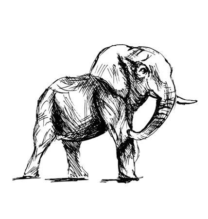herbivorous animals: Hand sketch of an elephant. Vector illustration