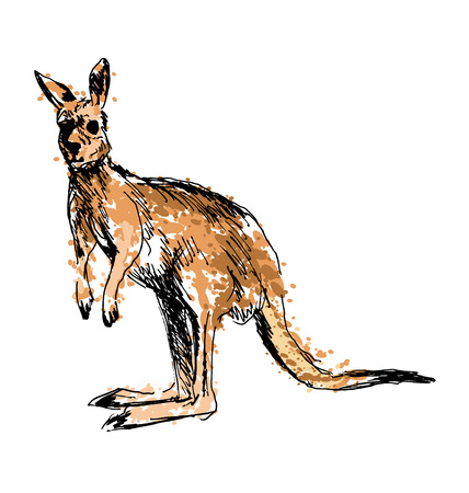 australian outback: Colored hand drawing of a kangaroo. Vector illustration