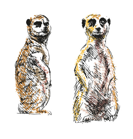 Colored hand drawing meerkats. Vector illustration