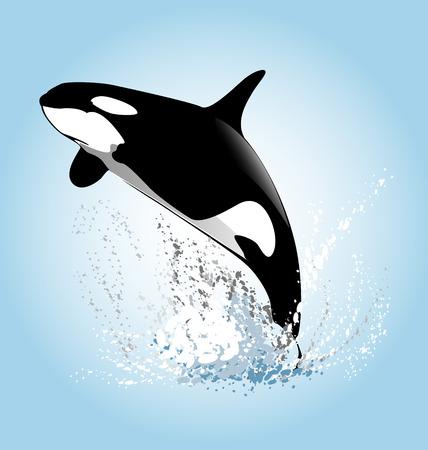 Vector ilustración de un orcas saltando Ilustración de vector
