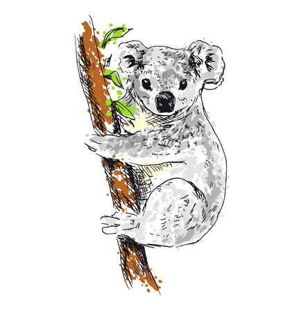 Colored hand drawing koala. Vector illustration Ilustração