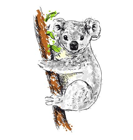 Colored hand drawing koala. Vector illustration Illustration