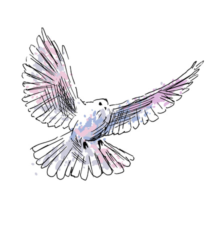 drawing dove: Colored hand drawing dove. Vector illustration