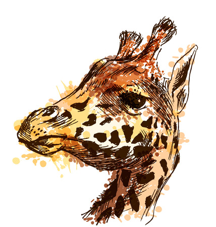 Colored hand sketch head giraffe