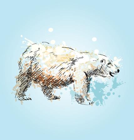 floe: Colored sketch of a polar bear. Illustration