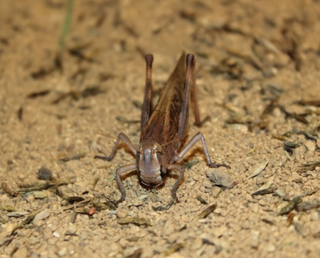front of: Grasshopper front