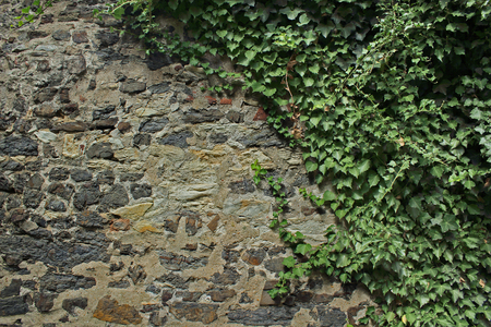 herbage: Old Wall with herbage Stock Photo