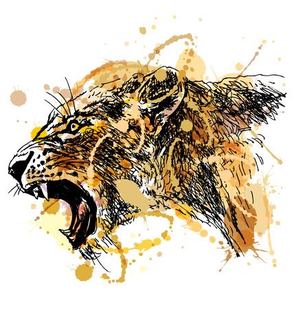 Bosquejo de la mano de color rugiente cabeza de leona. ilustración vectorial