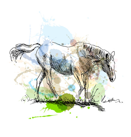 chew over: Colored hand sketch of a white horse. Vector illustration Illustration