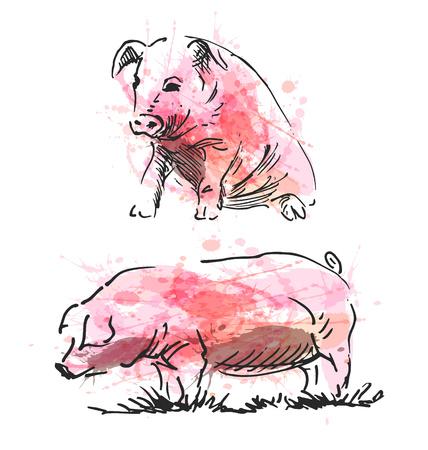 meat food: Colored hand sketch of a pig. Vector illustration Illustration
