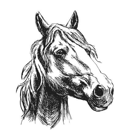 Hand sketch horse head. Vector illustration