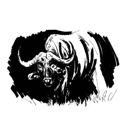 Hand drawing buffalo. Vector illustration Stock Vector - 72991730