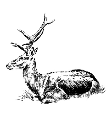 Hand sketch sitting deer. Vector illustration Illustration