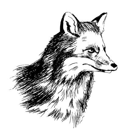 Hand sketch head fox. Vector illustration