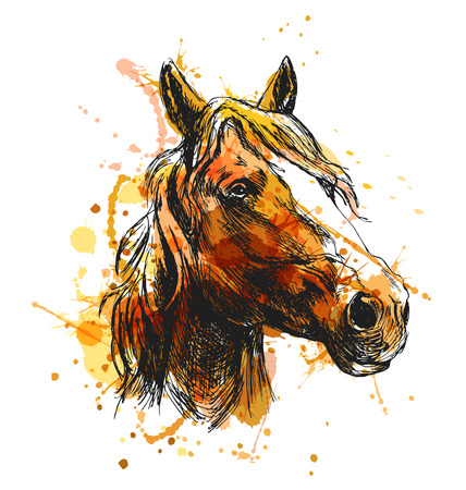 Colored hand sketch horse head. Vector illustration Stock Illustratie