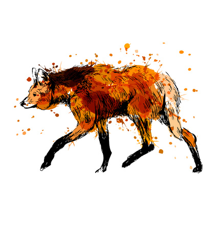 Colored hand sketch maned wolf. Vector illustration