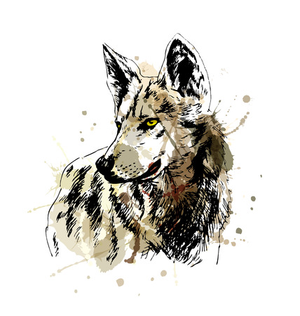 Colored hand sketch wolfs head. Vector illustration Illustration