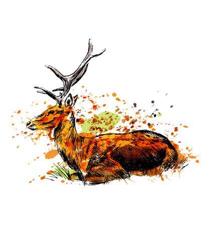 Colored hand sketch sitting deer. Vector illustration