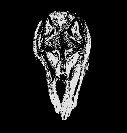 Hand drawing a wolf on a black background. Vector illustration