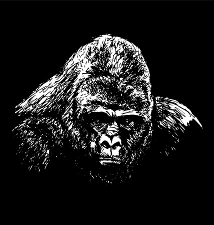 Hand drawing of a gorilla head on a black background. Vector illustration Illustration