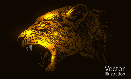 Vector illustration of the head of a lioness on a black background Illustration