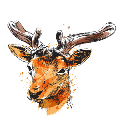 Colored hand sketch of a young deer. Vector illustration 向量圖像