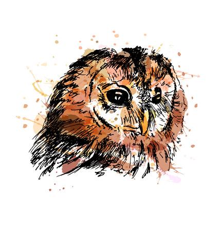 Colored hand sketch owl head. Vector illustration