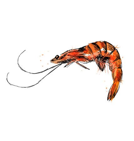 Colored hand sketch shrimp. Vector illustration Ilustrace