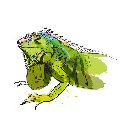 Colored hand sketch of iguana. Vector illustration Ilustrace