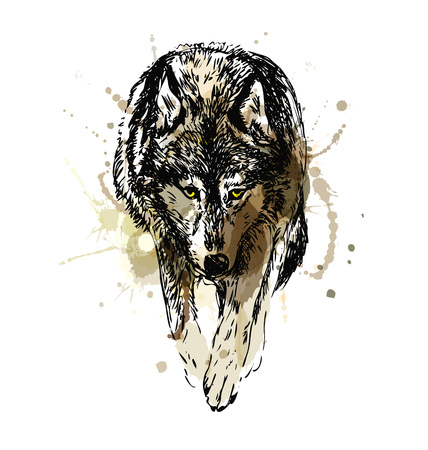 Colored hand sketched walking wolf