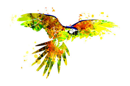 Vector illustration of a flying parrot ara