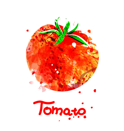 Vector Watercolor illustration of tomato Stok Fotoğraf - 79648052