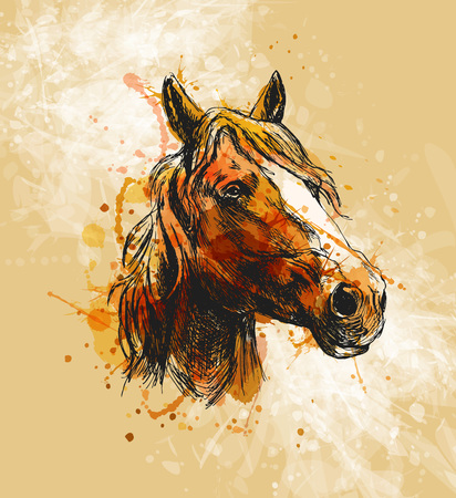 Cabezal de caballo de bosquejo a mano coloreado Foto de archivo - 86537565