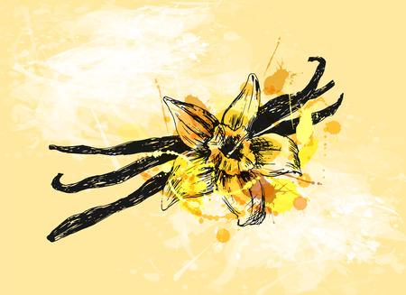 Colored hand sketch vanilla