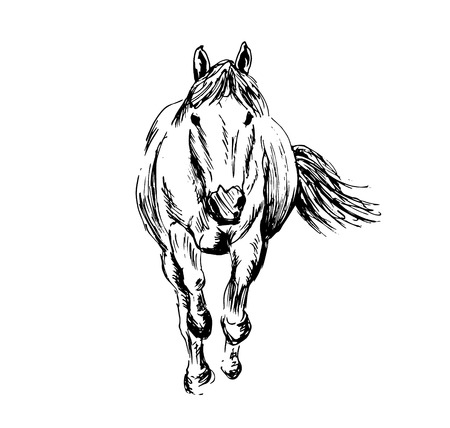 Hand sketch of a running horse vector illustration. 向量圖像