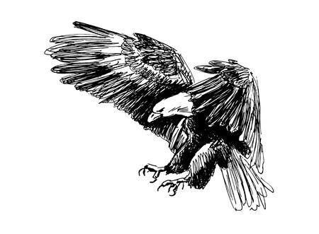 Hand sketch of a flying eagle vector illustration. Ilustração