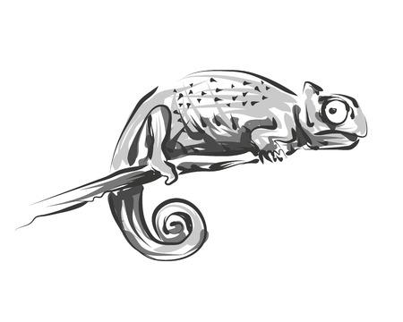 Vector line sketch chameleon