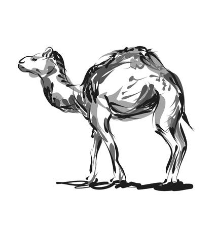 Vector lijn schets een kameel Stock Illustratie