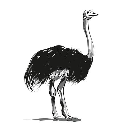 Vector schets struisvogel