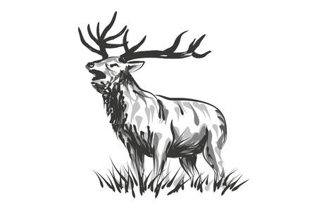 Vector line sketch deer