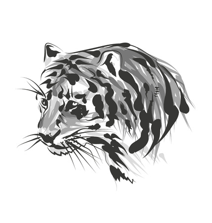 Vector sketch of the head of the tiger