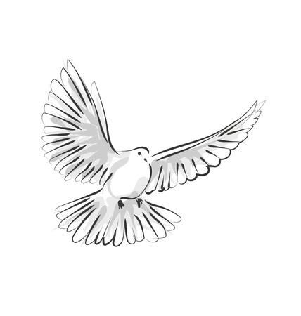 벡터 라인 스케치 비둘기 일러스트