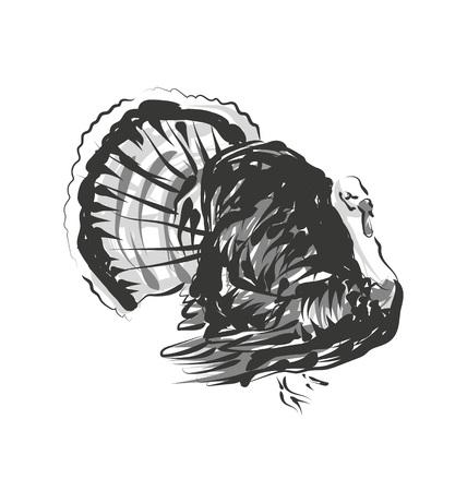 Vector line sketch sketch turkey