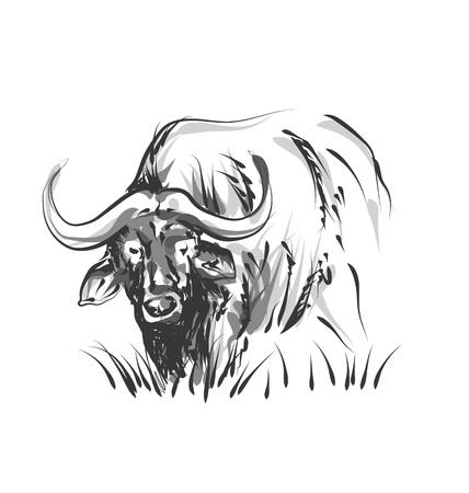 ベクター ライン スケッチ アフリカ水牛  イラスト・ベクター素材