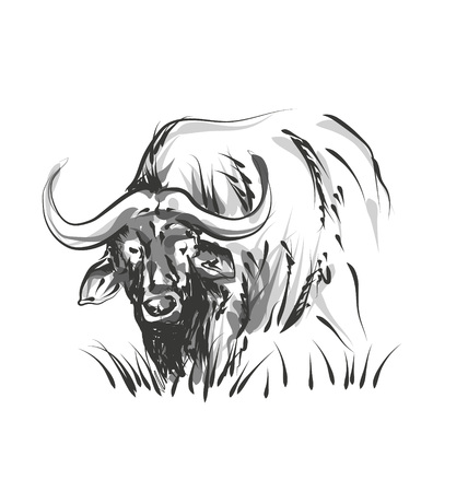 Vector line sketch African buffalo