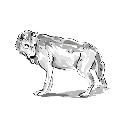 Vector line sketch of a wolf